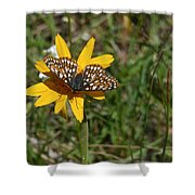 Checkerspot On Bahai Aster 1 Shower Curtain
