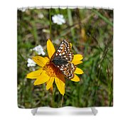 Checkerspot On Bahai Aster 2 Shower Curtain