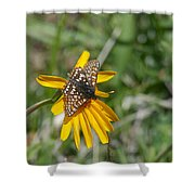 Checkerspot On Bahai Aster 3 Shower Curtain