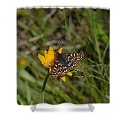 Checkerspot On Bahai Aster 4 Shower Curtain