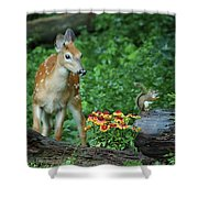 Checking Out The Squirrel Shower Curtain