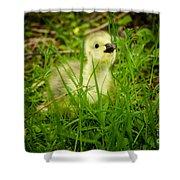 Cheeky Duckling  Shower Curtain