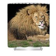 Cheeky Lion Shower Curtain