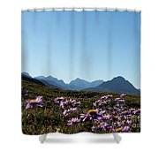 Cheerful Alpine Daisy Meadows Shower Curtain