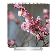 Cheerful Cherry Blossoms Shower Curtain