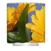 Cheerful Gerbera Daisies Shower Curtain