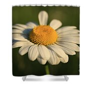 Cheerful Shower Curtain