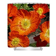 Cheerful Orange Flowers  Shower Curtain