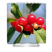 Cheery Cherries Shower Curtain
