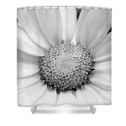 Cheery Daisy - Black And White Shower Curtain