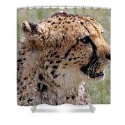 Cheetah No. 2  Shower Curtain