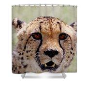 Cheetah No.1 Shower Curtain
