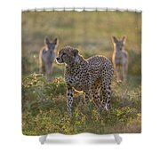 Cheetah Acinonyx Jubatus And Jackals Shower Curtain
