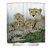 Cheetah And Her Cubs Shower Curtain
