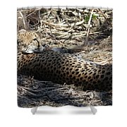 Cheetah Awakened Shower Curtain