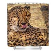 Cheetah Cattitude Shower Curtain