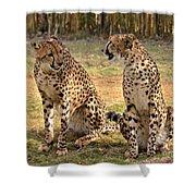Cheetah Chat 2 Shower Curtain