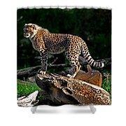Cheetah Cub Finds Her Pride Rock Shower Curtain