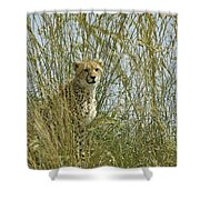 Cheetah Cub In Grass Shower Curtain