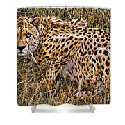 Cheetah In The Grass Shower Curtain