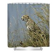 Cheetah Lookout Shower Curtain