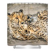 Cheetah Lounge Cats Shower Curtain