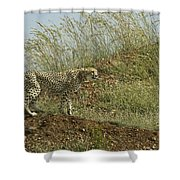 Cheetah On The Prowl Shower Curtain