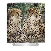 Cheetah Pair Shower Curtain