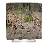 Cheetah Party I Shower Curtain