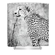 Cheetah Shower Curtain