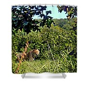 Cheetah Zoo Landscape Shower Curtain