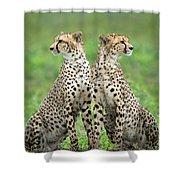 Cheetahs Acinonyx Jubatus In Forest Shower Curtain