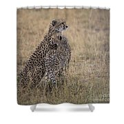 Cheetahs Shower Curtain