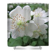 Cherokee Rose At The Farm Shower Curtain