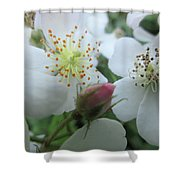 Cherokee Rose Dover Nh  Shower Curtain