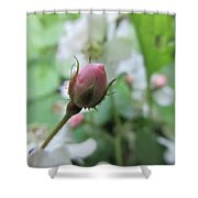 Cherokee Rose Of Dover Shower Curtain
