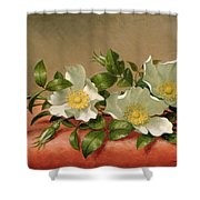 Cherokee Roses Shower Curtain by Martin Johnson Heade