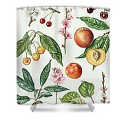 Cherries And Other Fruit-bearing Trees  Shower Curtain