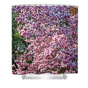Cherry Blossom - 2 Shower Curtain