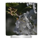 Cherry Blossom 5 Shower Curtain