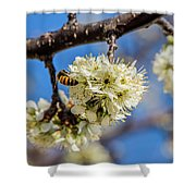 Pear Blossom And Bee Shower Curtain