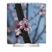 Cherry Blossom Branch Shower Curtain