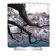 Cherry Blossom Breeze Shower Curtain