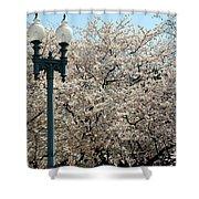 Cherry Blossom Festival Shower Curtain