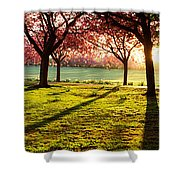 Cherry Blossom In A Park At Dawn Shower Curtain
