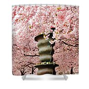 Cherry Blossom In Stockholm Shower Curtain