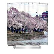 Cherry Blossom In Washington D C Shower Curtain