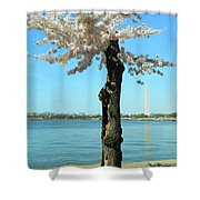 Cherry Blossom Portrait Shower Curtain