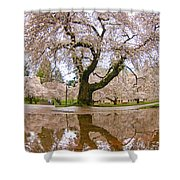 Cherry Blossom Reflection Shower Curtain