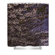 Cherry Blossom Sky Shower Curtain